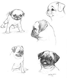 Drawn pug easy Our animals miss I the