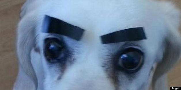 Drawn pug eyebrow Dogs With With (PICTURES) Eyebrows