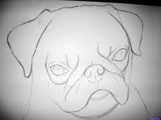 Drawn pug face Comic by kid Jr Bob