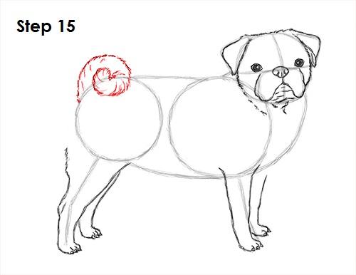 Drawn pug family drawing 15 (Pug) Dog Draw How