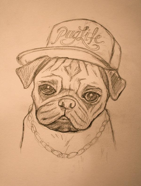 Drawn pug gentleman Gangster (Pug The The