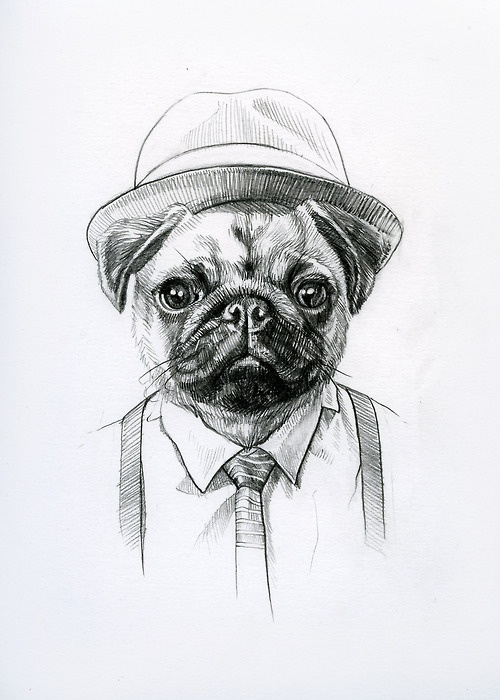 Drawn pug hipster On images #art #illustration #drawing