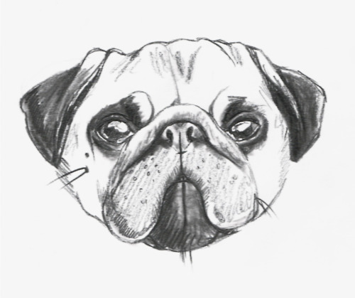 Drawn pug illustrated Hoyle Seriously  day Charlotte