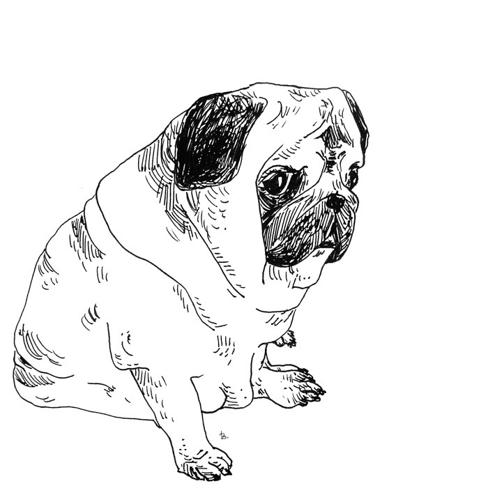 Drawn pug illustration tumblr Tumblr pugs artists drawing badziek