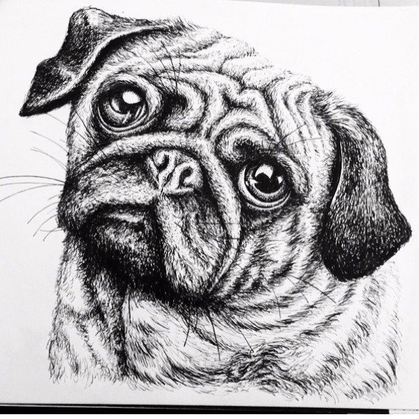 Drawn pug ink Little so business drawing on