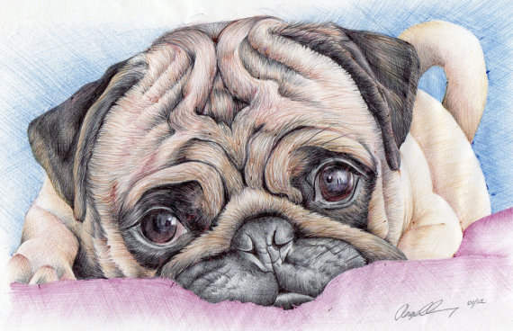 Drawn pug ink Pug and pen print ACEO