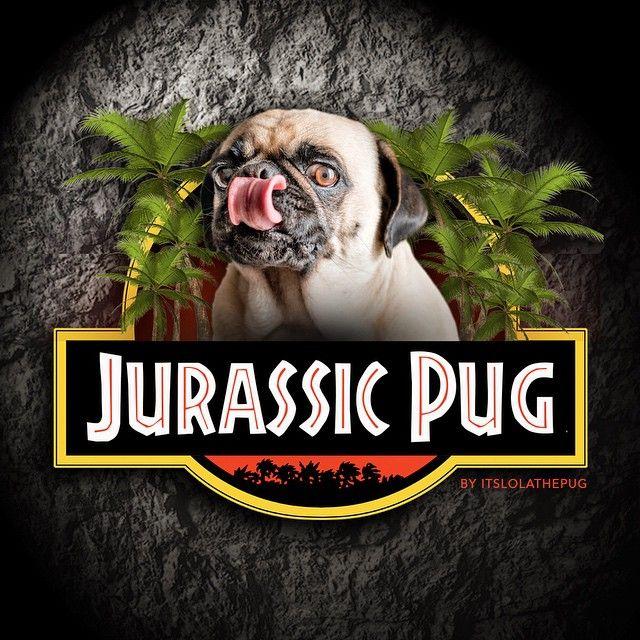 Drawn pug jurassic Pug on images Pinterest here!