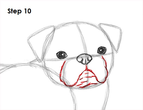 Drawn pug line drawing 10 Draw Dog to (Pug)