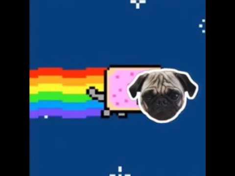 Drawn pug nyan NYAN YouTube PUG!!! NYAN PUG!!!