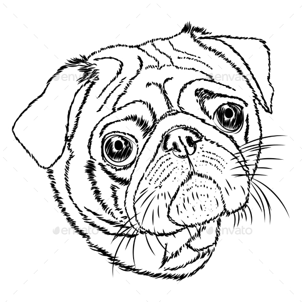 Drawn pug outline White Vector Linear on Background