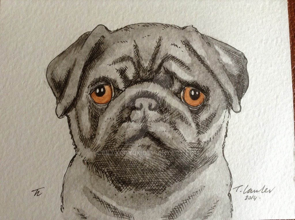 Drawn pug pen Painting pug billyboyuk billyboyuk drawing