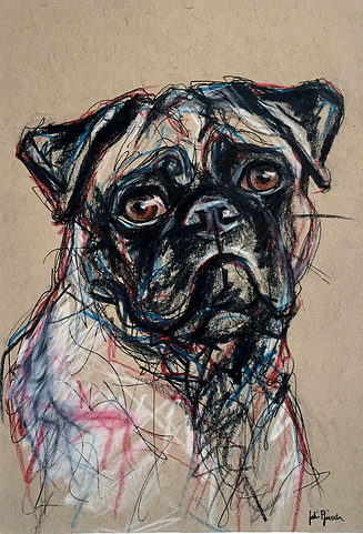 Drawn pug pen Pen on colored pen and