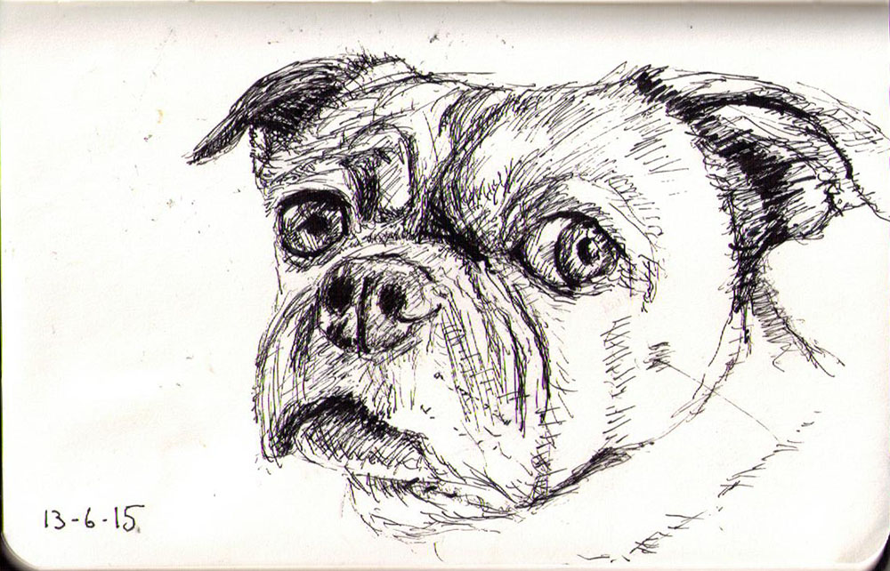 Drawn pug pen Pen dog of in One