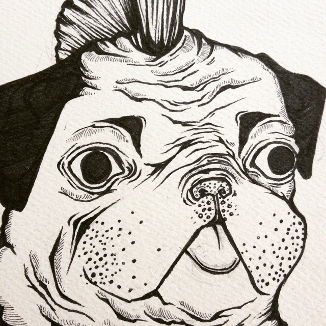 Drawn pug pen Instagram draw art pug on