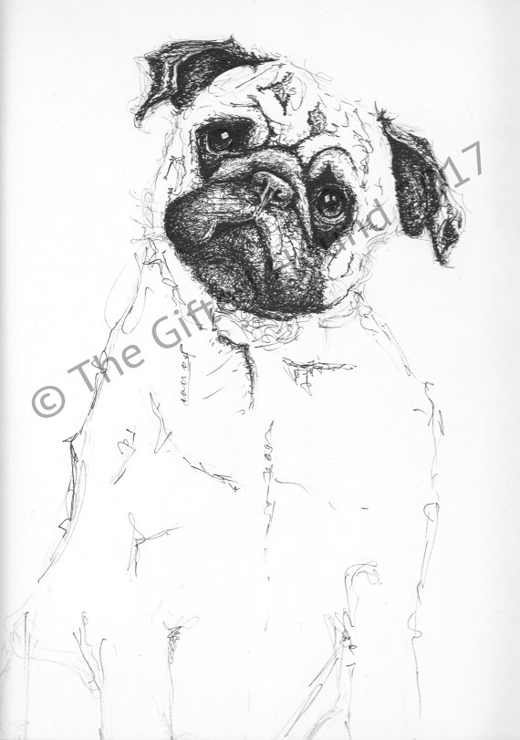 Drawn pug pen Drawing pen portrait/gift and Pug