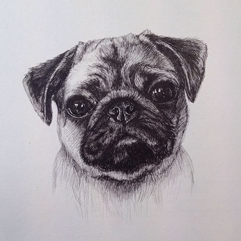 Drawn pug pen Yesterday flowers I videos Instagram