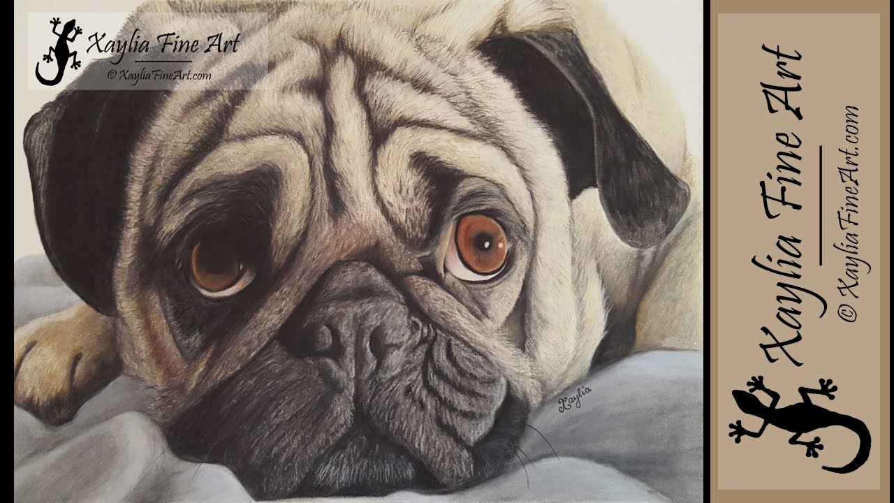 Drawn pug pencil drawing Pencils in how draw