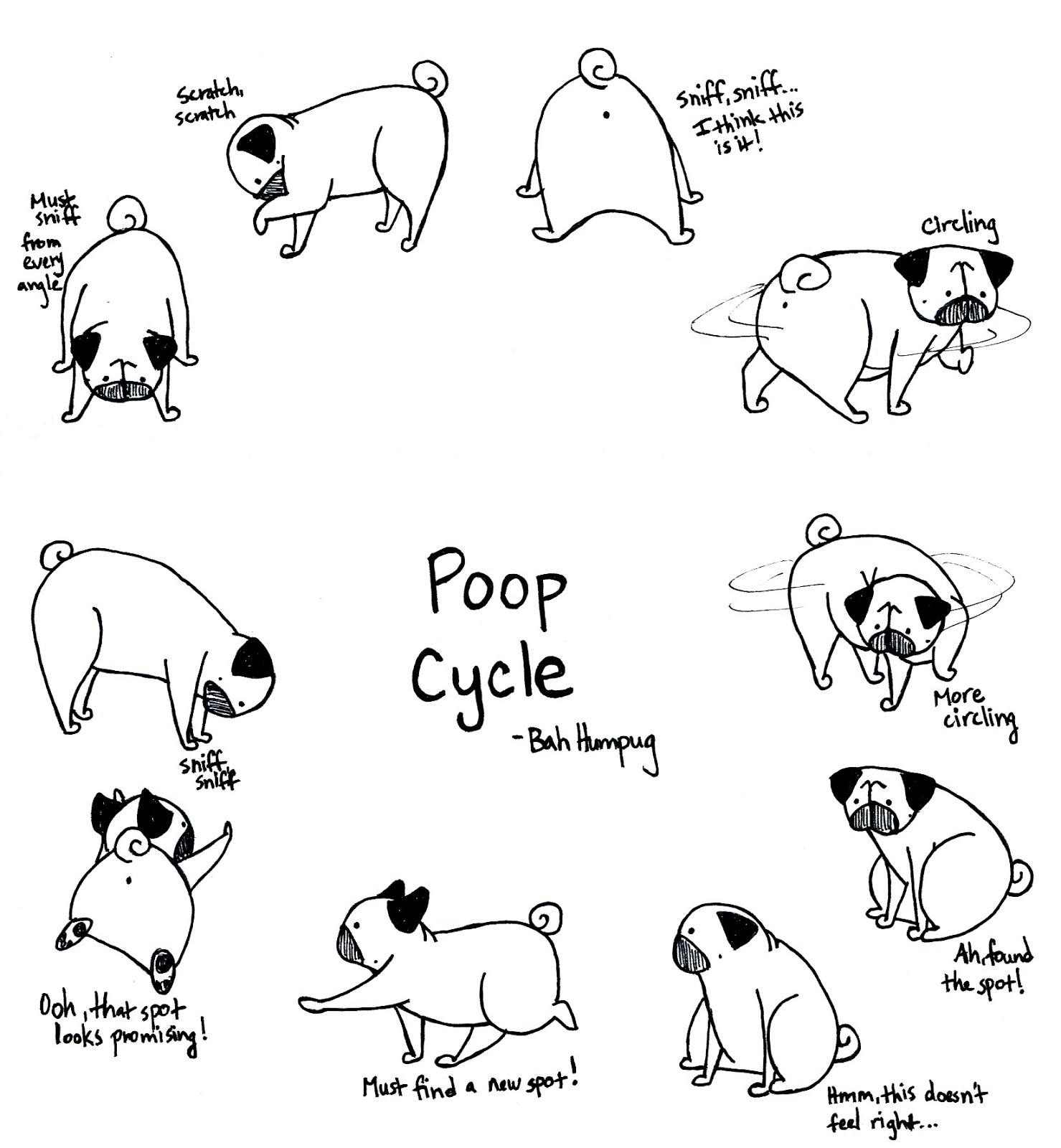 Drawn pug poo Humpug: Cycle Pug Cycle Poop