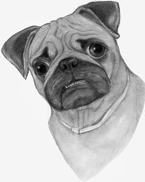 Drawn pug pug dog Dogs jpg pencil dogs pug