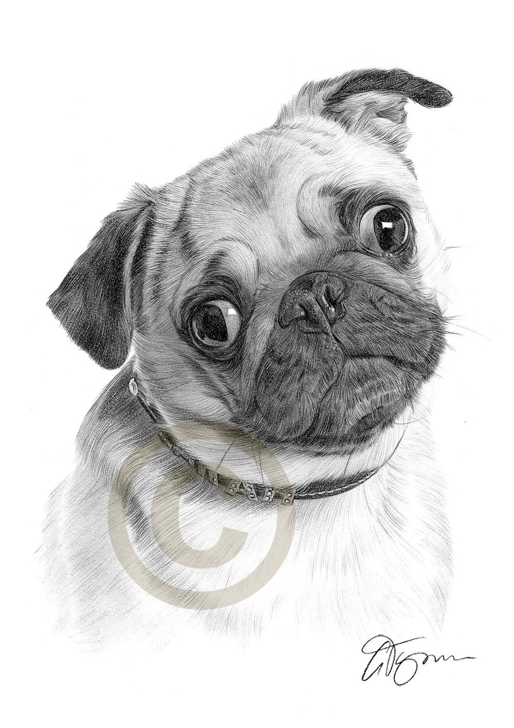 Drawn pug pug dog Thumbnail pencil Worldwide signed prints