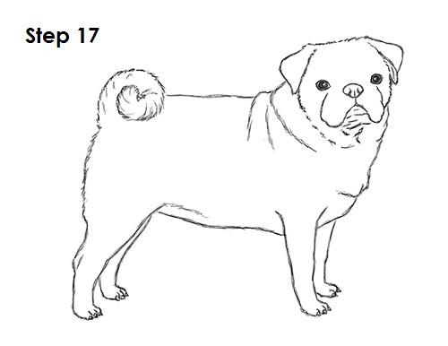 Drawn pug pug dog To 17 Draw (Pug) Drawing