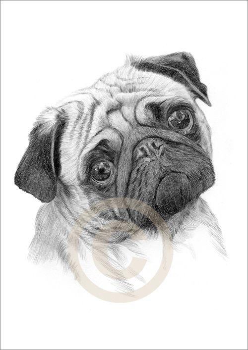 Drawn pug pug dog Pug cats Art A4 Edition