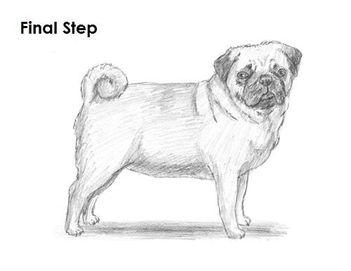 Drawn pug pug dog To Last Draw (Pug) Drawing