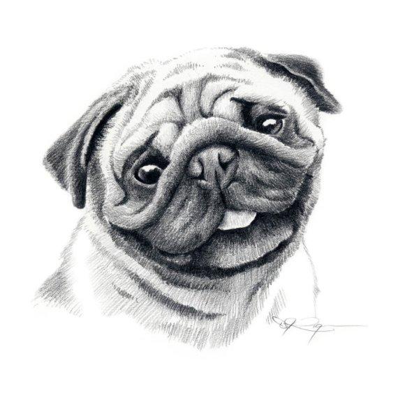 Drawn pug pug dog Print Drawing Signed Rogers to