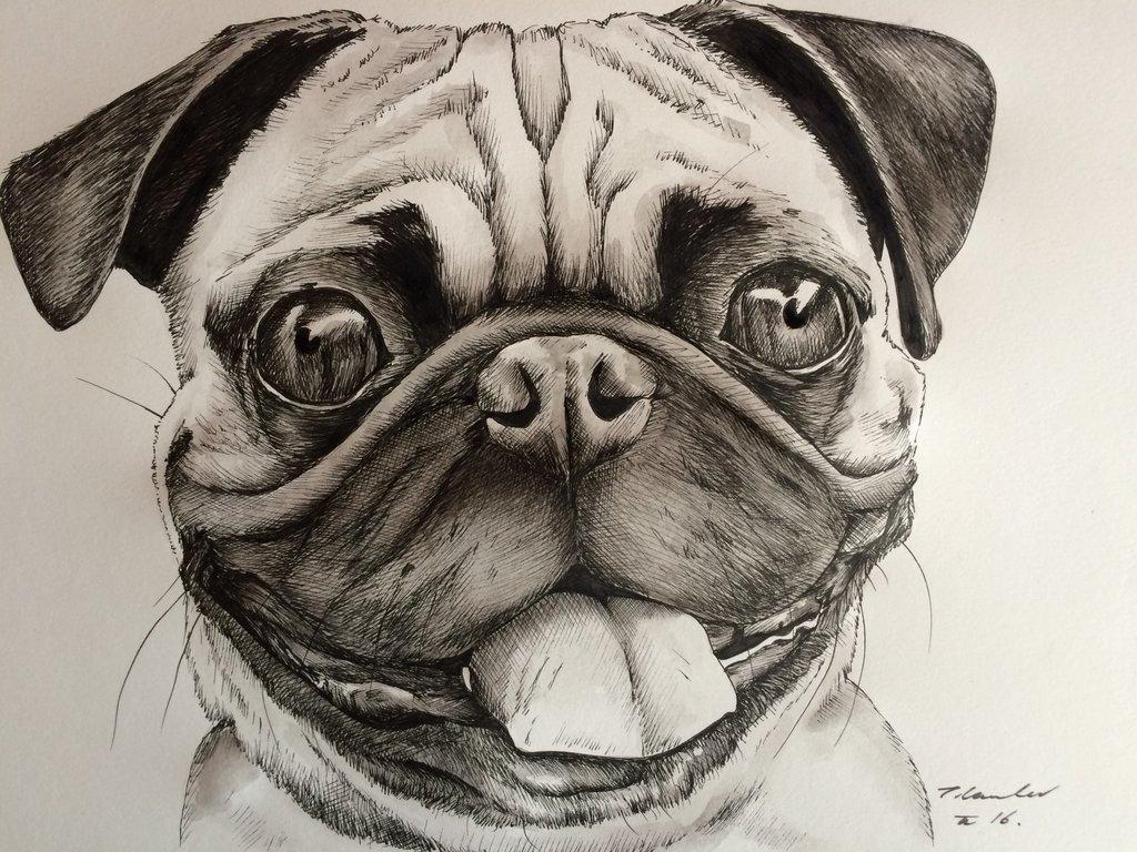 Drawn pug pug dog By painting billyboyuk painting by