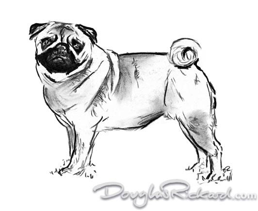 Drawn pug real dog Pug drawing