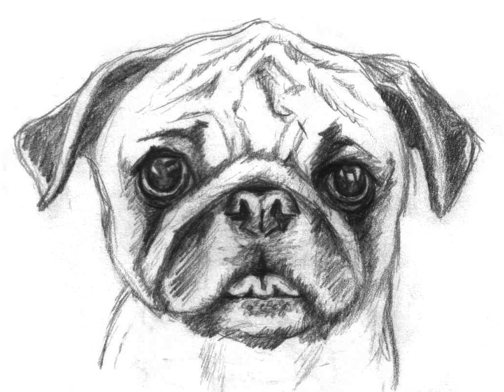 Drawn pug realistic About on coloring images or