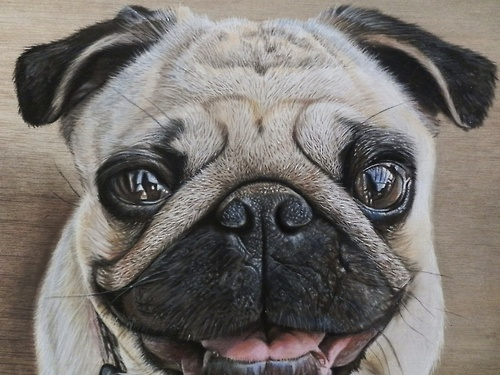 Drawn pug realistic On Of Of by drawing