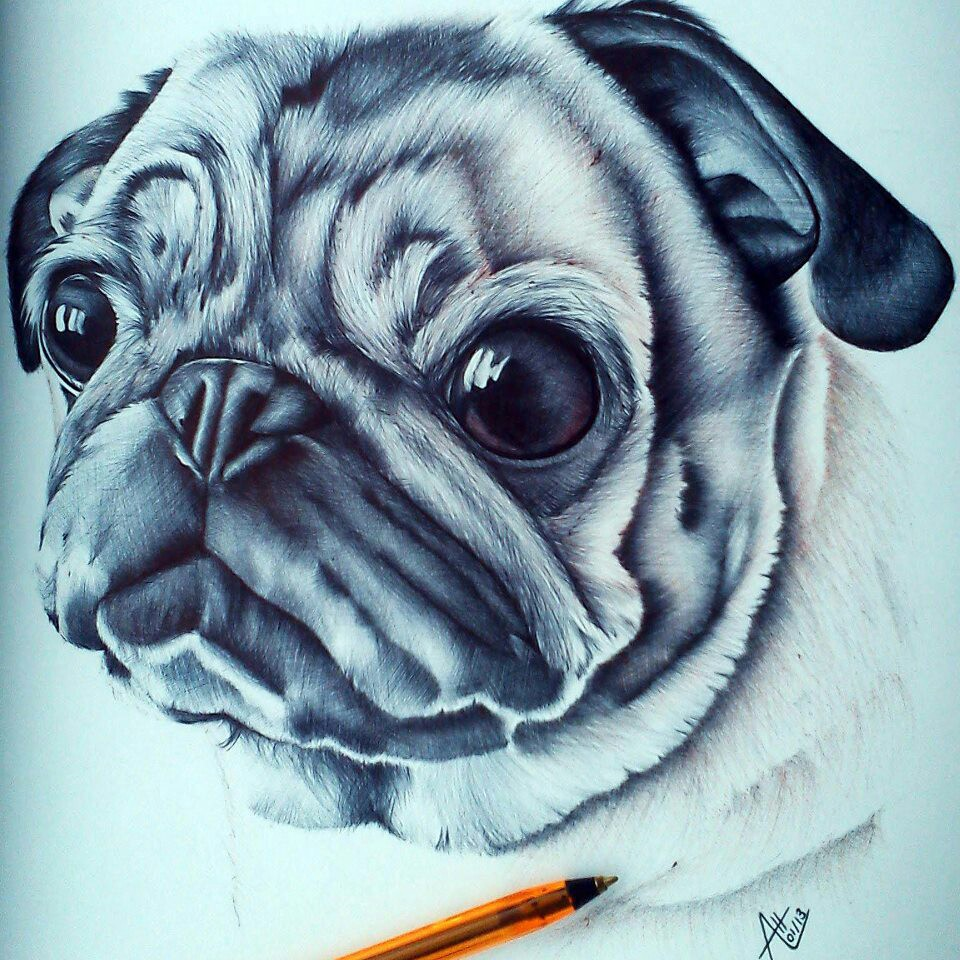 Drawn pug realistic More  a for ballpoint