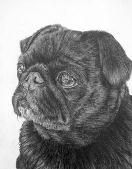 Drawn pug rip Passed include: gizmo that I