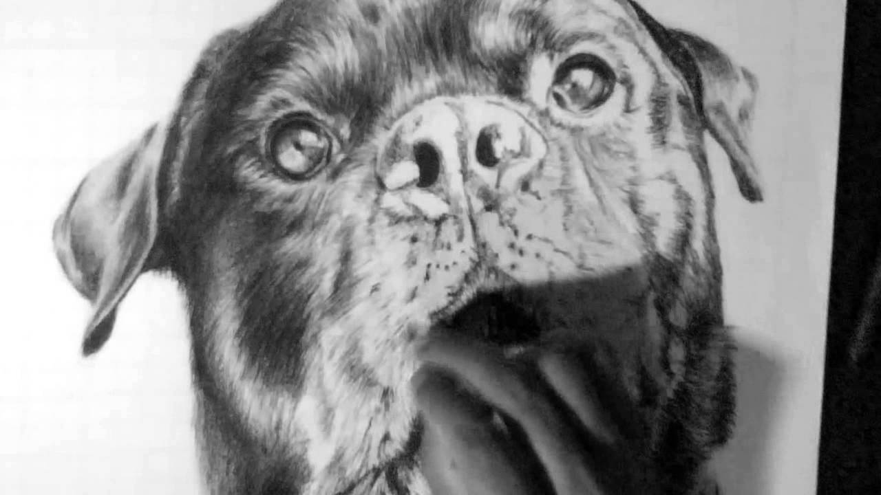 Drawn pug rip R The P Rottweiler Oz