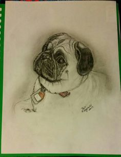 Drawn pug rip Drawing colored Bill pencil Portraits