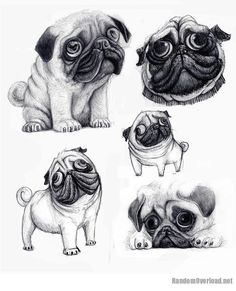 Drawn pug rip Design caricature Wouldn't Not Thought