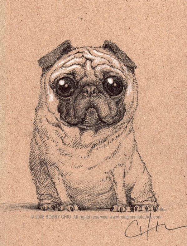 Drawn pug rip Images best imaginism Pugs by
