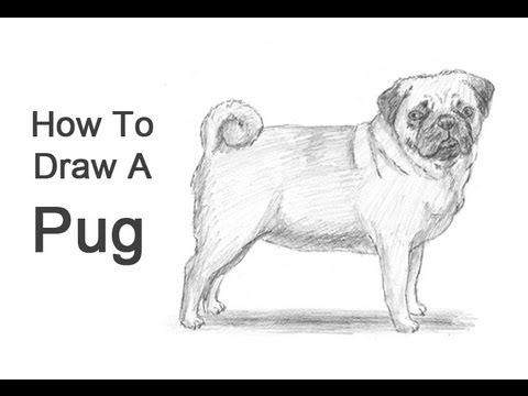 Drawn puppy real dog (Pug) Draw How How Dog