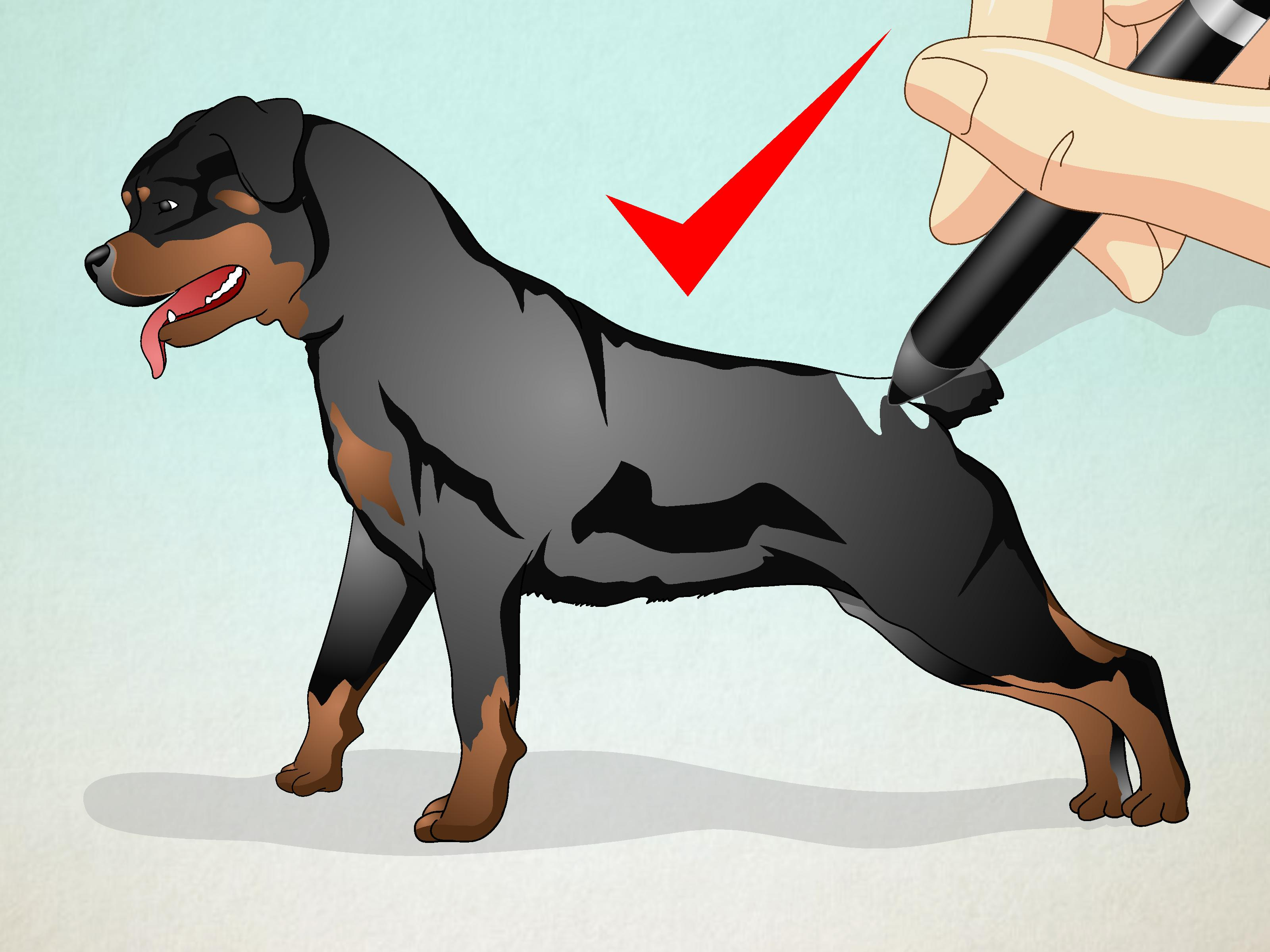 Drawn puppy real dog WikiHow to Dog:  Pictures)