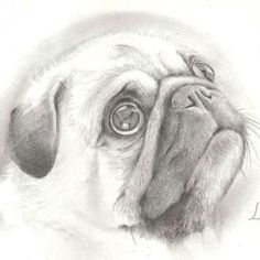 Drawn pug sketch Unknown Pug PUG Parker PICS