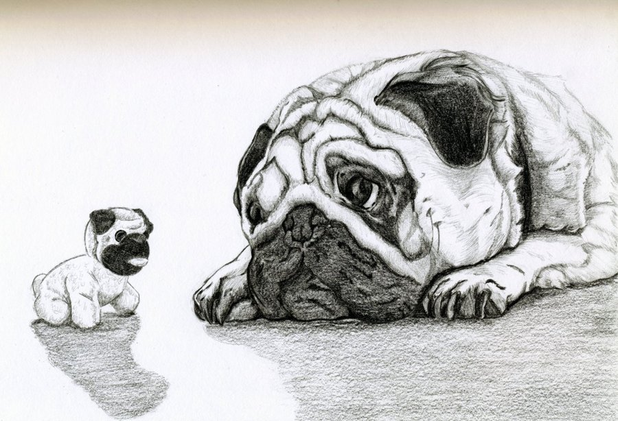 Drawn pug sketch Pug by DeviantArt Ferrell32 Pug