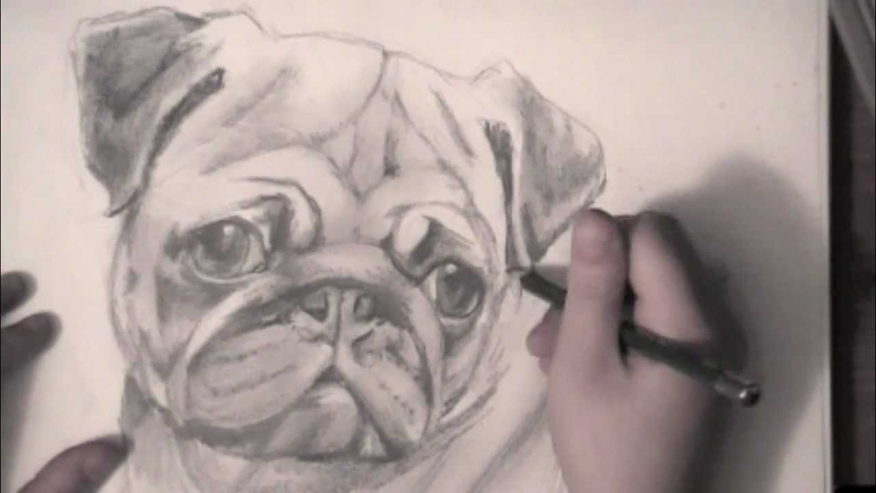 Drawn pug sketch YouTube A  Pug Drawing