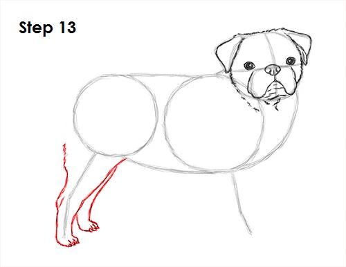 Drawn pug step by step Draw Drawing Step Draw (Pug)
