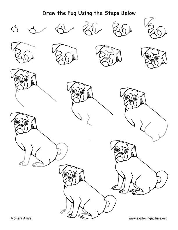 Drawn pug step by step Drawing  Lesson Pug