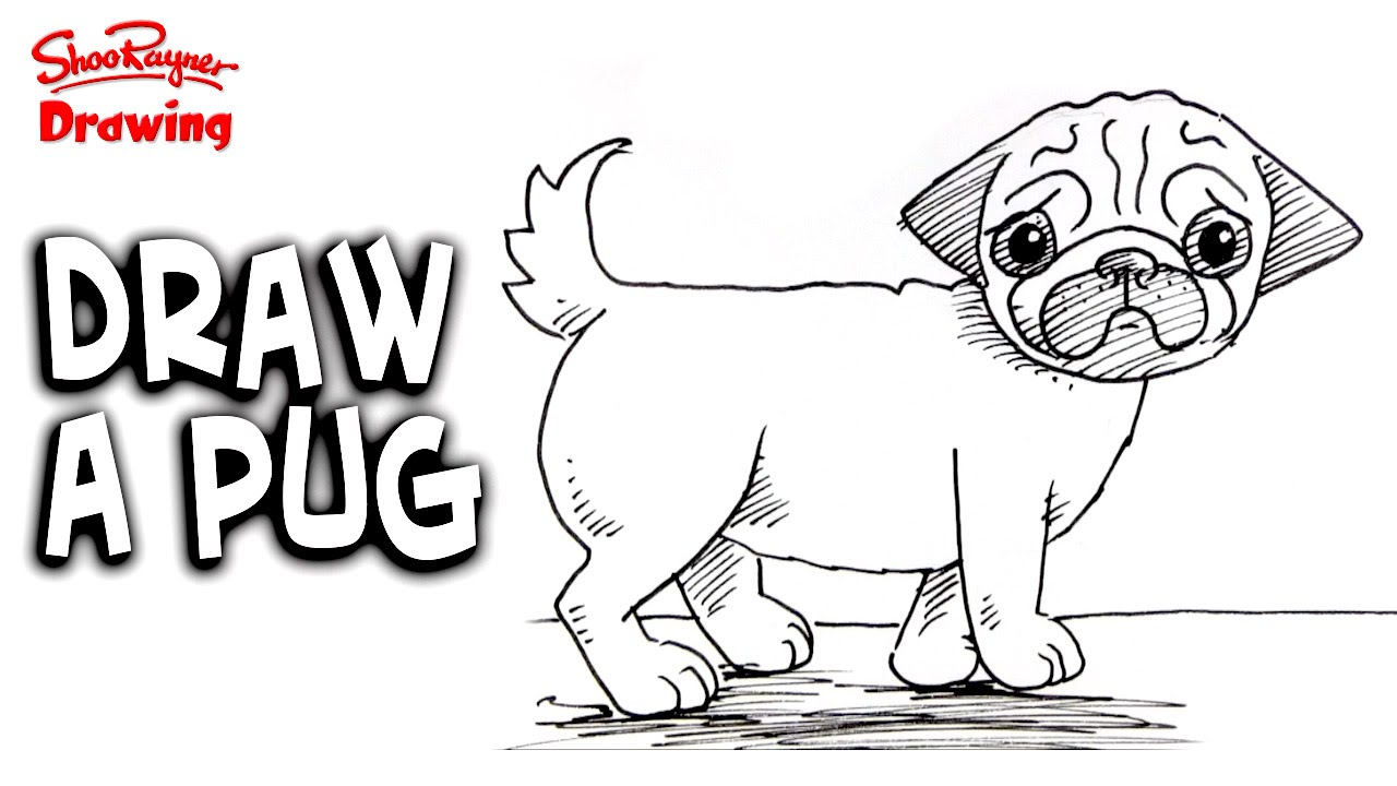 Drawn pug step by step By step to a draw