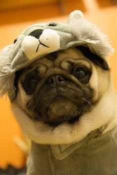 Drawn pug supe Pinterest pig a koala Cute