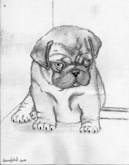 Drawn pug tiny Little by PascalunaOriginals DeviantArt sketch
