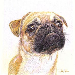 Drawn pug watercolor IanReesArt Pug 196 by images