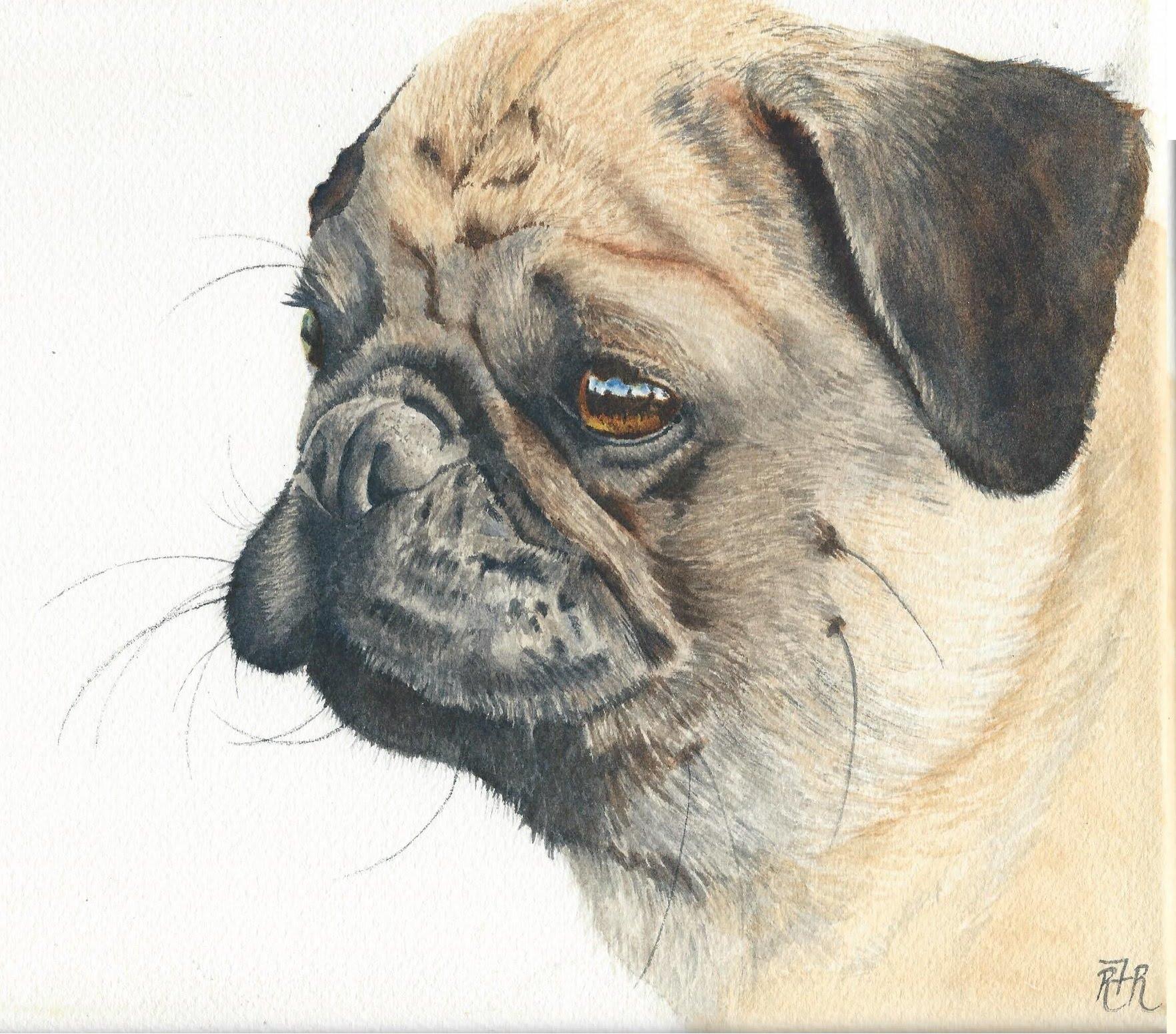 Drawn pug watercolor Tutorial  YouTube Painting Pug